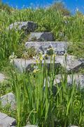 Stock Photo of Antique stones in green grass with narcissus on foreground