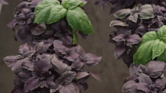 Inside the greenhouse with seedlings Stock Footage