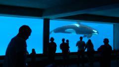 An Underground Aquarium With An Orca Killer Whale Stock Footage