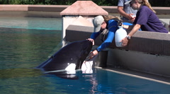 An Orca Killer Whale Has Its Teeth Cleaned At Marineland Canada Stock Footage
