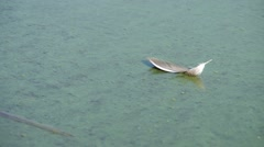 Bird's feather on the surface of the lake Stock Footage