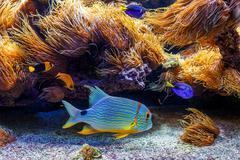 Colorful exotic fishes in aquarium. - stock photo