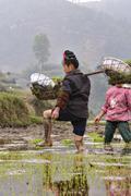 Chinese peasant woman walks barefoot through mud of rice fields. - stock photo