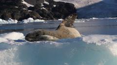Seal sleeping on Iceberg Stock Footage