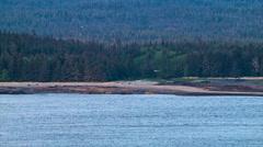Alaska Wild Sea Birds Flying Along Coast Line Stock Footage