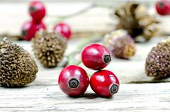 Detail of red rose hips on old wooden table Stock Photos