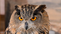 Eagle Owl in a Zoo Park Stock Footage