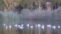 Installation videos Autumn pond in park Stock Footage