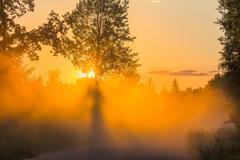 Misty dawn with sunbeams sunset rays tree - stock photo