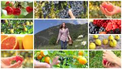 fruit harvest montage - stock footage