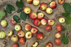 Still-life with red-ripe apples and green leaves on burlap background. - stock photo