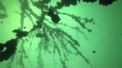 Beautiful underwater tree with falling particles branches in slow motion Stock Footage