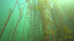 Movement under water during high algae in fresh water Stock Footage