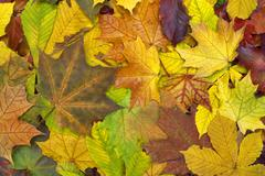Beautiful colorful background with fallen leaves on the ground. - stock photo