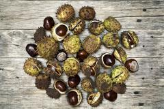Colorful decoration with horse-chestnut. - stock photo
