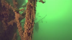Underwater tree in the freshwater lake,formed by silt on branches Stock Footage