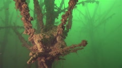 Underwater forest in the freshwater lake formed by silt on branches Stock Footage