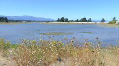 Provincial Park Near Parksville BC Vancouver Island Stock Footage