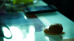 Snail on the coffee table with mobile phone and plate with grapes in background - stock footage
