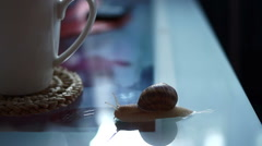 Snail on the coffee table, crawling Stock Footage
