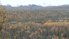 Fall Colors and Foliage in Alaska Spruce and Aspen Forest - stock footage