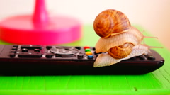 Snails on remote control,  one traveling on the other shell Stock Footage