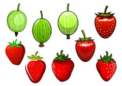 Fresh red strawberry and green gooseberry Stock Illustration