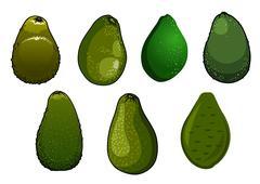 Stock Illustration of Dark green isolated avocado fruits