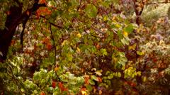 Early autumn rain with sound.September rain  on my window. Stock Footage