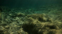 Protected Sea Bed Floor Capo Caccia Bay - 29,97FPS NTSC Stock Footage