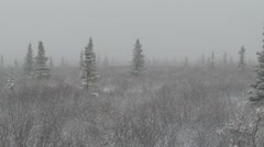 Snow in Far North Taiga in Alaska - stock footage