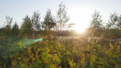 Camera moving across the wild autumn field. Pano dolly shot - stock footage