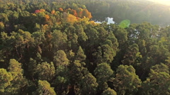 Aerial shot of forest trees and the lake at dawn Stock Footage