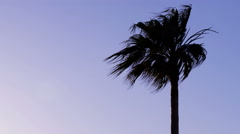 Palm tree waving in wind before storm at dusk Stock Footage