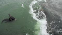 Seals playing in Rough Ocean WS Stock Footage