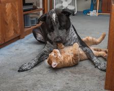 Big dog and little kitty having fun Kuvituskuvat
