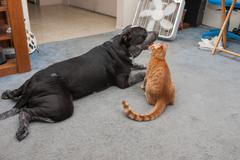 Big dog and little kitty hanging out together Stock Photos
