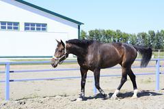 Beautiful filly Polish mongrel breed - stock photo