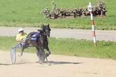 Trotting Races at the Hippodrome Sibirskoe podvorie Stock Photos