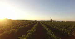 Aerial view of a vineyard during sunrise Stock Footage