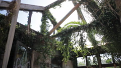 Plants taking over an abandoned building Stock Footage