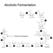 Chemical scheme of alcoholic fermentation metabolic pathway Stock Illustration