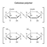 Cellulose polymer molecule - chemical formula Stock Illustration