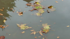 The car rides on a pool in which the autumn leaves Stock Footage