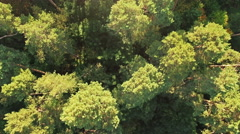 aerial shot of a pine forest at dawn - stock footage