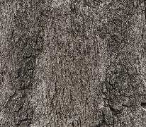 Texture of a wood from tree, Black and white tone Kuvituskuvat