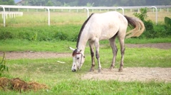 White horse grazing near race course stable. Stock Footage