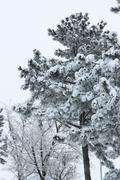 Winter forest in the snowy stormy weather - stock photo