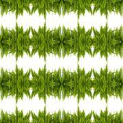 Tuber Sword Fern Seamless Pattern Background Stock Illustration