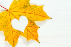 Stock Photo of Maple leaf with heart shape